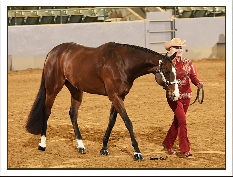 Opinion you amateur aqha jumping classes apologise, but